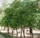 ¿Qué árboles plantar?