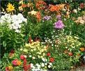 Cómo darle color a tu jardín