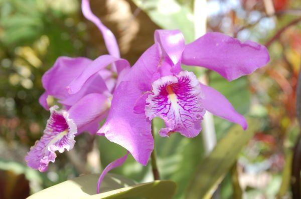 Piñas, Ciudad Orquídea de Los Andes