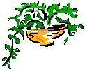 Todo sobre las plantas colgantes