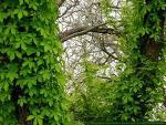 Plantas enredaderas: cómo cuidarlas y hacerlas lucir