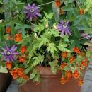 Cómo combinar flores y plantas en macetas y canteros