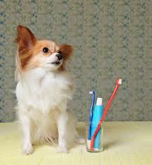 Cómo limpiar los dientes de tu perro