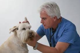 Cómo cuidar las orejas, ojos y uñas de tu perro
