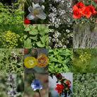 Cómo cultivar plantas aromáticas y  medicinales