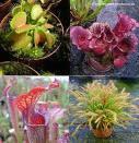 Cómo cultivar plantas carnívoras