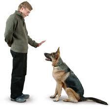 La técnica más efectiva para educar a tu perro: video paso a paso