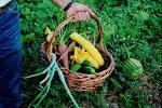 Cómo cultivar plantas culinarias