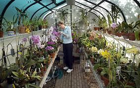 Invernaderos caseros: plantas que crecen en armonía
