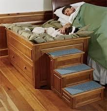 ¿Dónde debe dormir tu perro?