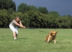 ¿Qué hacer con los cachorros hiperactivos?