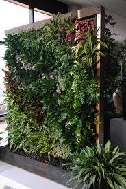 Cómo usar plantas para separar espacios en el hogar