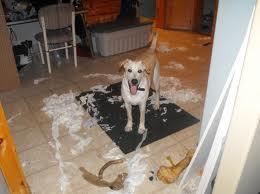 Cómo evitar que tu perro destruya tu casa