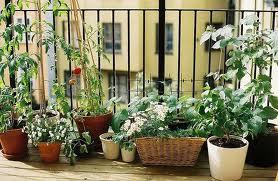Cómo cuidar las plantas en el balcón