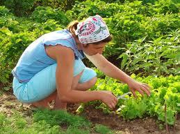 Cuidados básicos del jardín