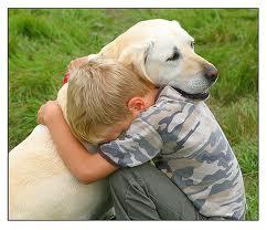 Consejos para atraer a un perro perdido