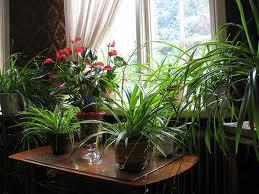 Plantas de bajo mantenimiento