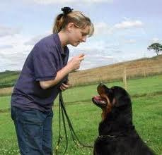 Cómo adiestrar a tu perro para que haga sus necesidades donde corresponde