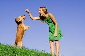 Cómo adiestrar a tu perro para que deje de masticar