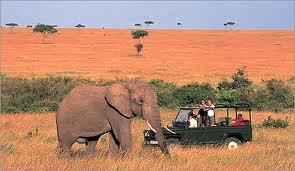 Kenia, la meca del safari