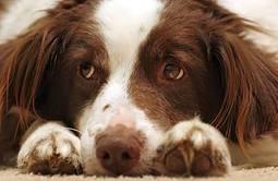 ¿Los perros se aburren?