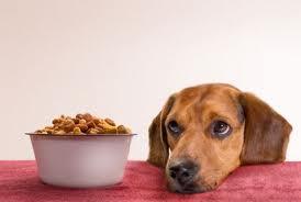 ¿Cuáles son los mejores alimentos para perros?