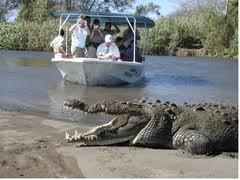 Cómo hacer un safari