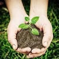 Cómo hacer abono orgánico