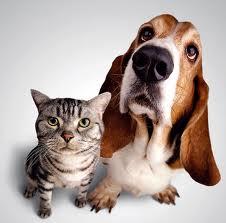 ¿Conoces los derechos de tu animal?