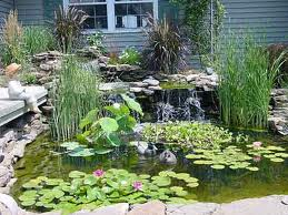 Cómo tener un original jardín de plantas acuáticas