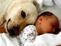 ¿Qué hacer con la mascota cuando llega un bebé al hogar?