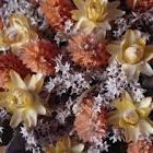 Cómo secar flores naturales