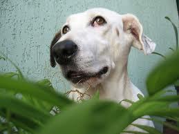 Plantas tóxicas para los perros y otros animales