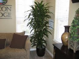 ¿Cuáles son las plantas más perfumadas para el interior de un hogar?