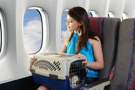 Cómo viajar en avión con una mascota