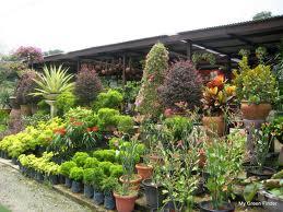 Cómo elegir hierbas ornamentales para tu jardín