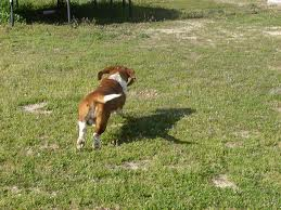 ¿Por qué se escapan los perros?