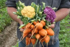¿Qué verduras cultivar en una huerta?