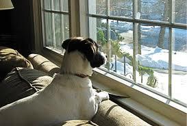 Consejos para dejar a tu perro solo en casa