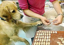 Cómo hacer galletas caseras para perros y gatos