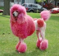 Tintes para perros