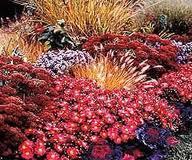 Cómo tener un jardín de otoño