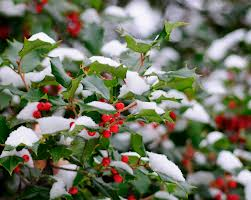 Consejos para proteger las plantas del frio