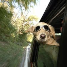 Como proteger del sol a perros y gatos