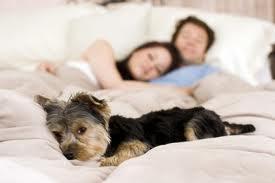 ¿Es bueno dormir en la misma habitación que tu perro?