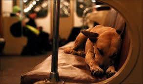 Cómo viajar con tu perro en autobús o tren