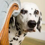 Cómo tratar la ansiedad en los perros