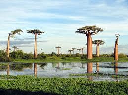 Vacaciones en Madagascar