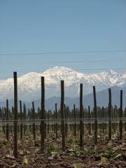Mendoza, algo más que vino y montañas