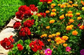Cómo agregar color a tu jardín